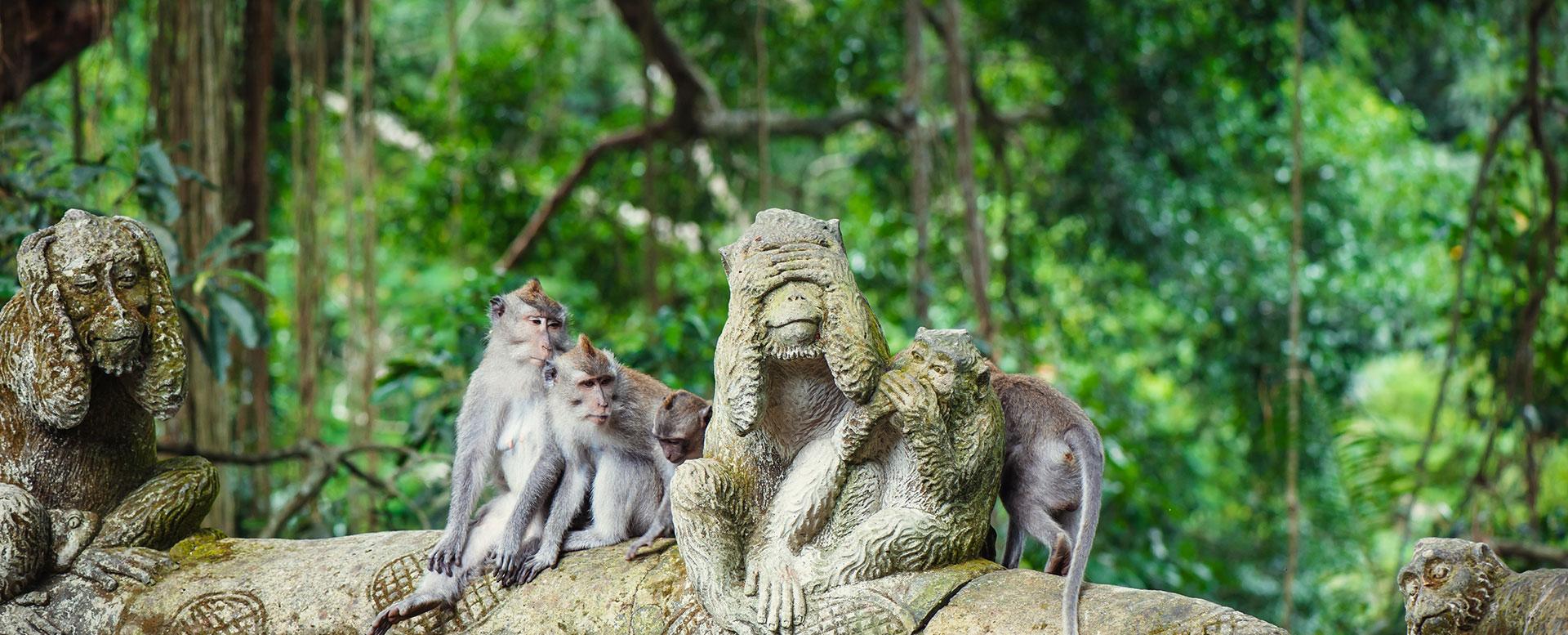 Affen auf Bali - Spaß für Kinder