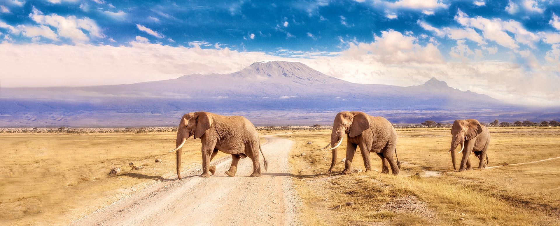 Elefanten Südafrika