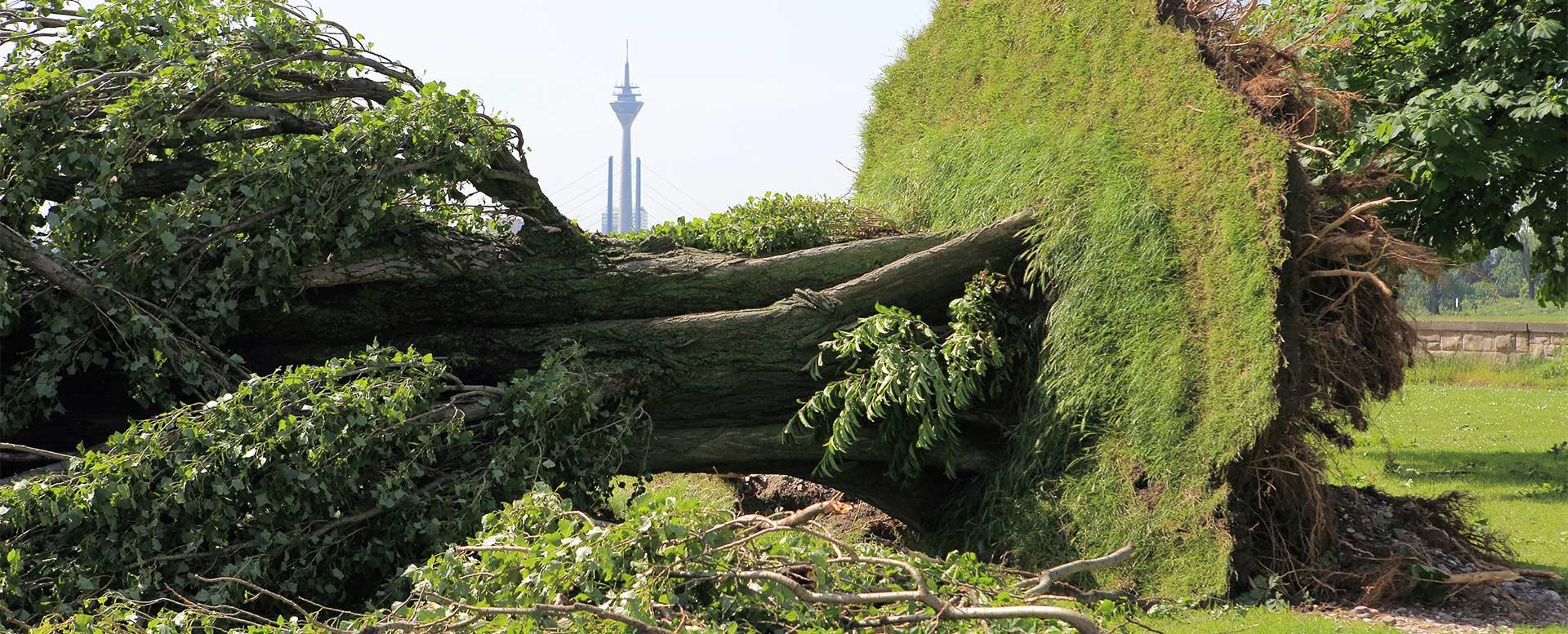 Umgestürzter Baum nach Unwetter