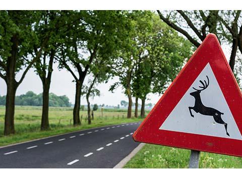 Warnschild Wildwechsel
