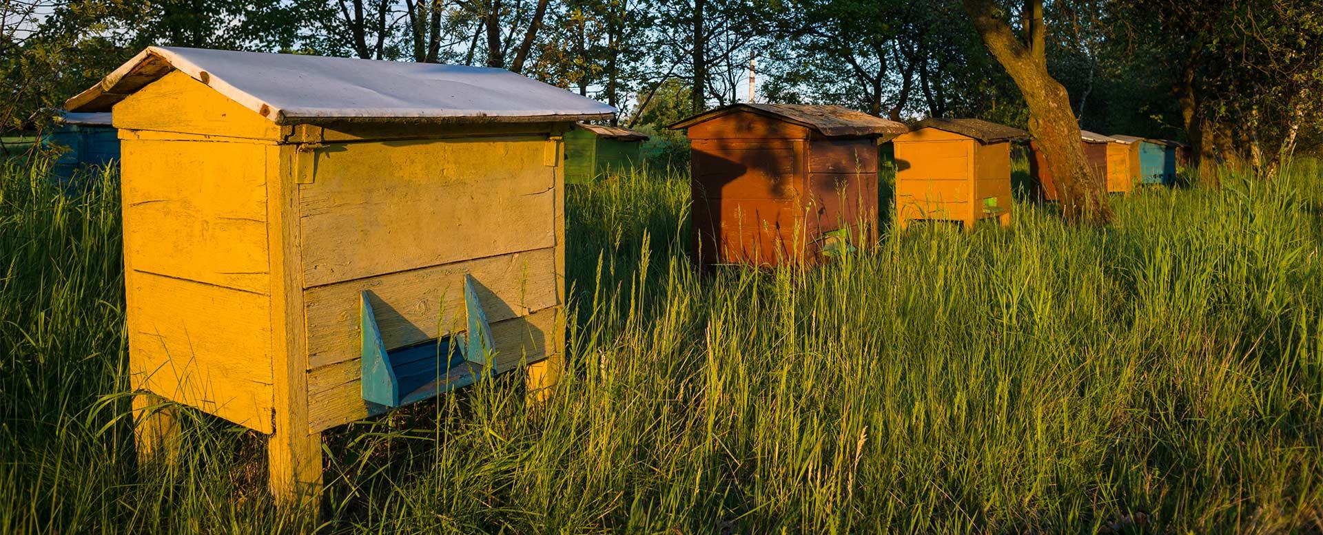 Bienenkästen zur Bienenhaltung