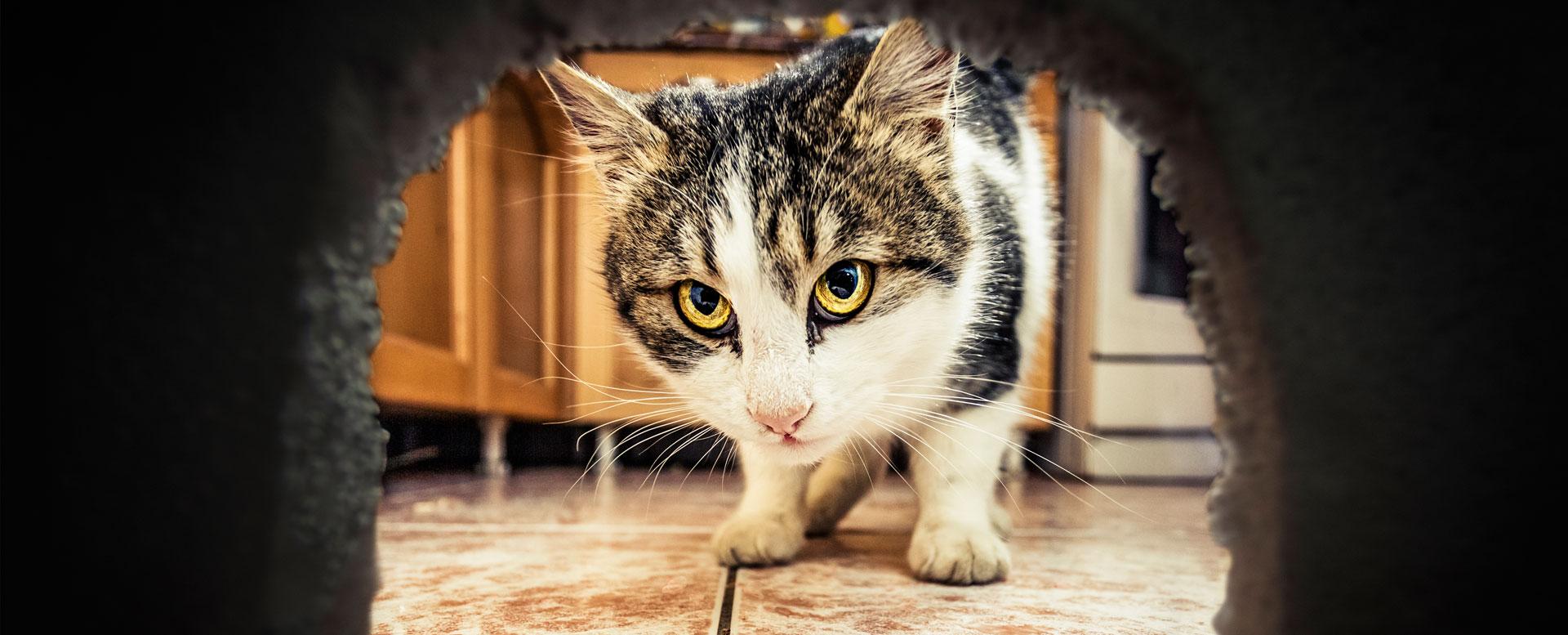 Das hilft gegen Mäuse im Haus