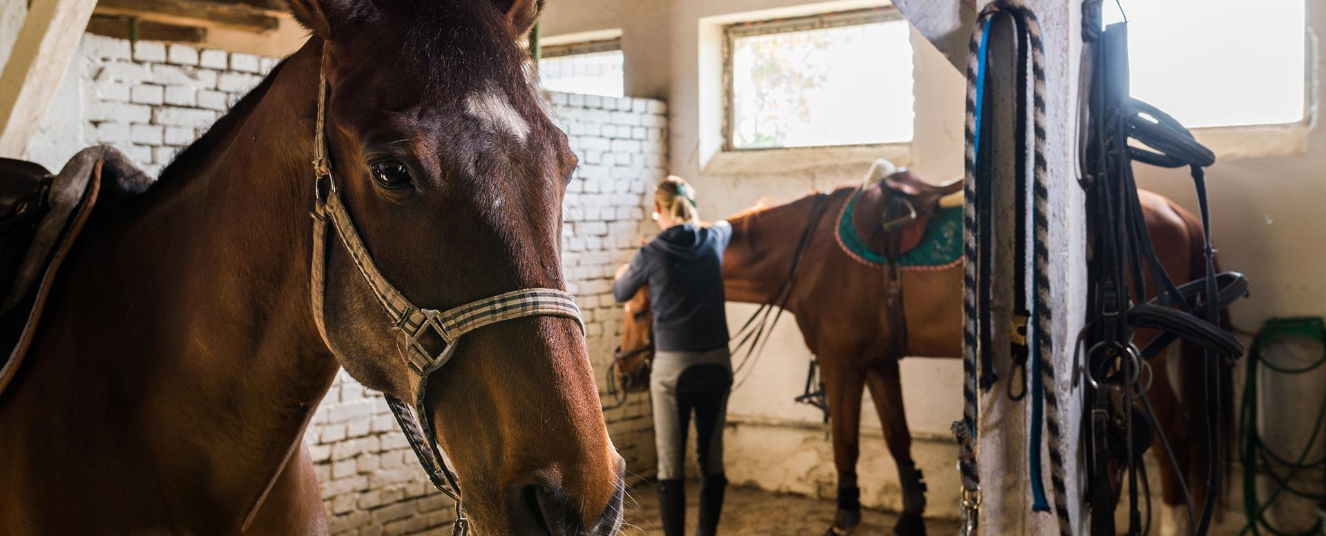 Pferdeversicherung - das gehört dazu