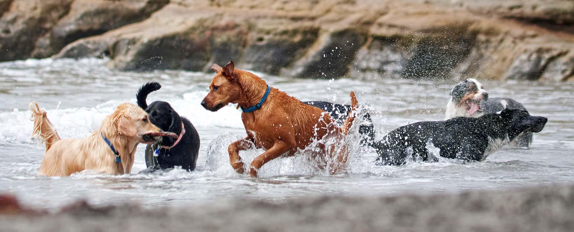 FCI-Gruppen: Hunderassen im Überblick