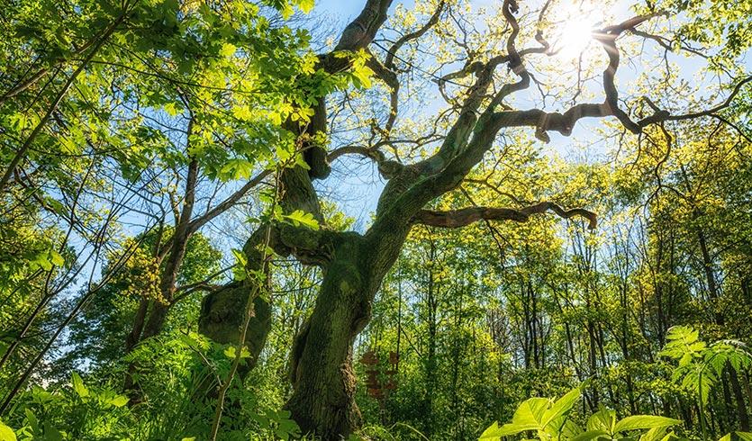 Wildnis pur in Thüringen - Wanderung für Anfänger